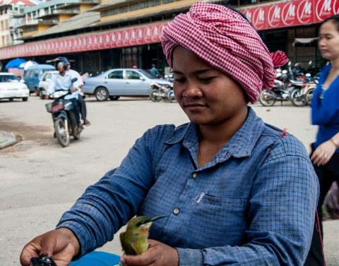 Birds to buy to release, Battambang