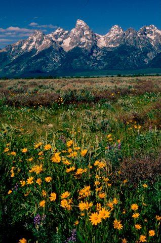 Antelope Flats, Grand Tetons, Wyoming (2000)