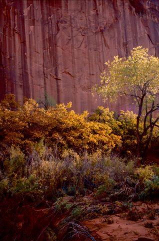 Side canyon, Lake Powell, Utah (1996)