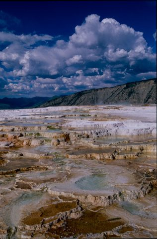 Canary Spring, Mammoth Upper Terrace, Yellowstone WY (2000)
