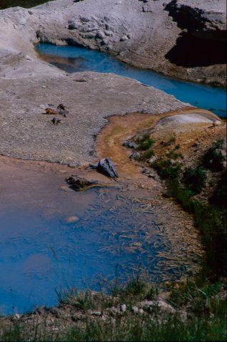 Ledge Geyser, Norris Geyser Basin, Yellowstone WY (2000)