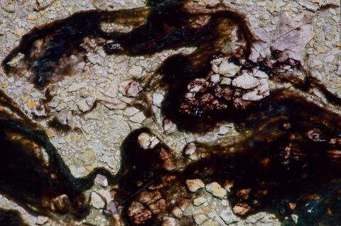 Bacteria Mat, Norris Geyser Basin, Yellowstone WY (2000)