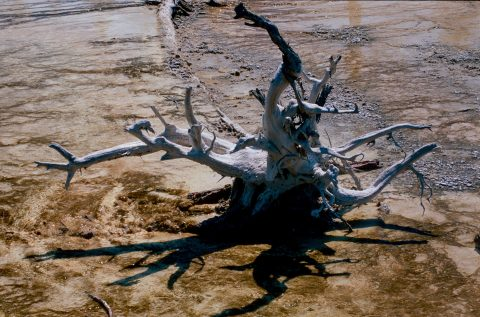 Bacteria Mat, Lower Geyser Basin, Yellowstone WY (2000)