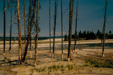Lower Geyser Basin, Yellowstone WY (2000)