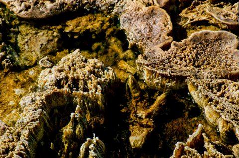 Algae Beds, West Thumb Basin, Yellowstone WY (2000)