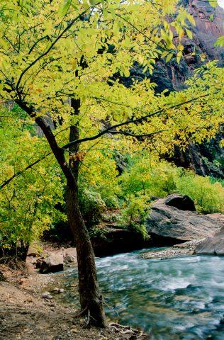 Virgin River, Zion Canyon,  Utah (1996)