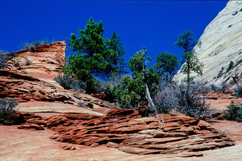 Upper Zion Canyon, Utah (2004)
